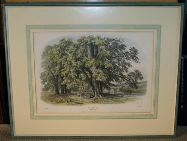 Image for The Wych Elm. Norbury Park No 19