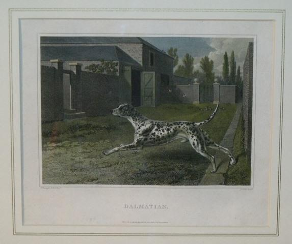 "Image for Dalmatian. Printed ""P. Reinagle"" and on the right side is printed ""J. Scott sculp"""