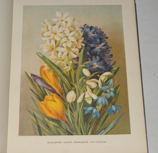 Image for The Flower Grower's Guide. With Coloured Illustrations by Miss Gertrude Hamilton and Miss Marie Low, and numerous illustrative diagrams... In Six Volumes.