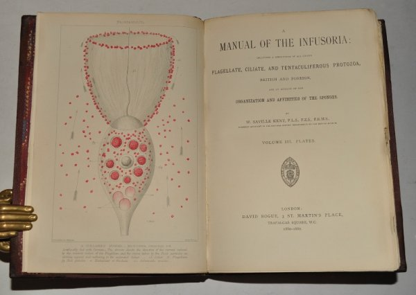 Image for A Manual of the Infusoria: Including a description of all known Flagellate, Ciliate, and Tentaculiferous Protozoa, British and Foreign, and an account of the organization and affinities of the sponges. In Three Volumes.