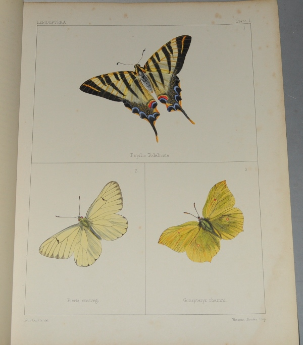 "Image for The Genera of British Lepidoptera. Transferred from the Original Figures, in 193 Plates of ""British Entomology."""