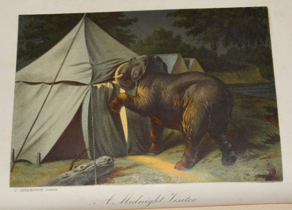 Image for 13 Years Among The Wild Beasts of India: Their Haunts and Habits from Personal Observation; With an account of the Modes of Capturing and Taming Elephants. Second Edition.