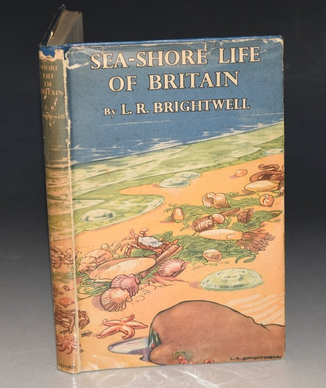 Image for Sea-Shore Life of Britain