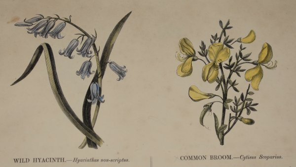 Image for Wild Flowers Published Under The Direction of the Committee of General Literature and Education, Appointed by the Society for Promoting Christian Knowledge.