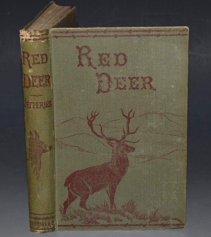 Image for Red Deer