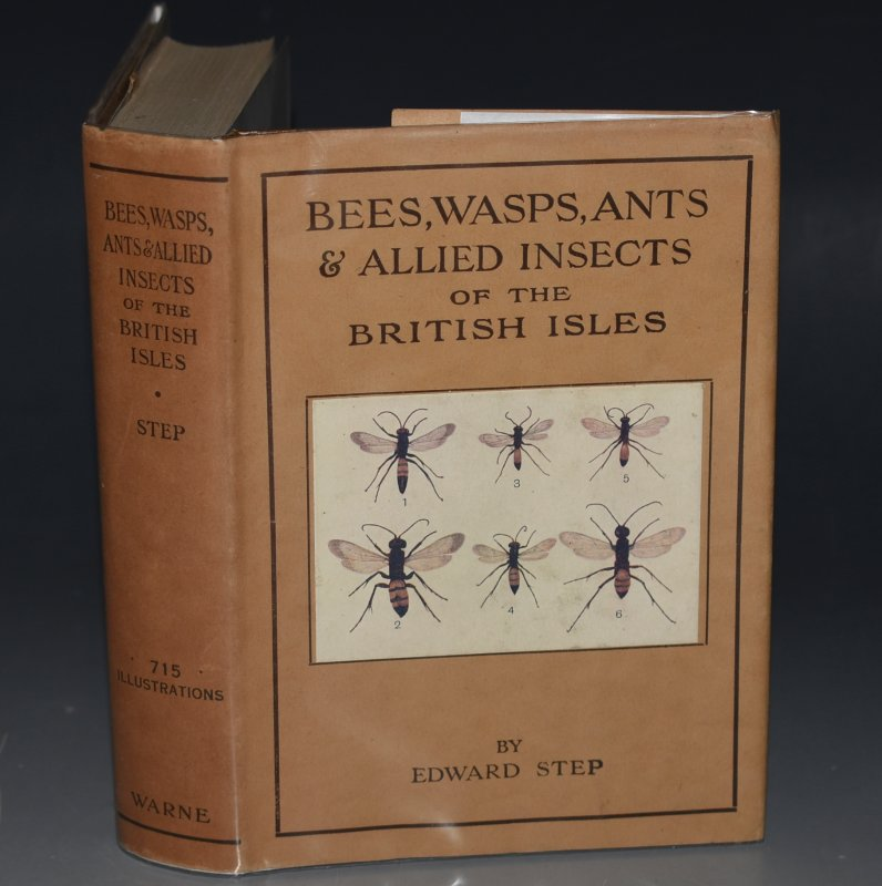 Image for Bees, Wasps, Ants & Allied Insects of the British Isles. Wayside & Woodland Series.