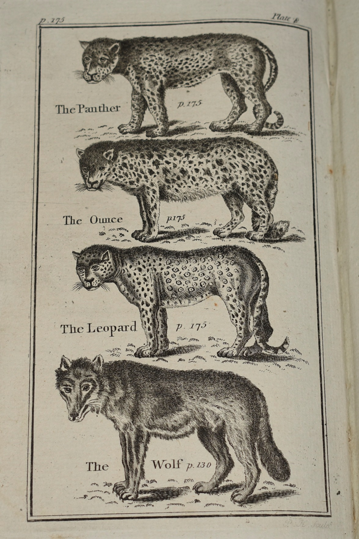 Image for Buffon's Natural History Abridged. Including the History of; The Elements, The Earth & its Component Parts ... of Man, Quadrupeds, Birds, fishes... and The Insect World. Illustrated with a Great Variety of Copper-Plates, elegantly engraved.