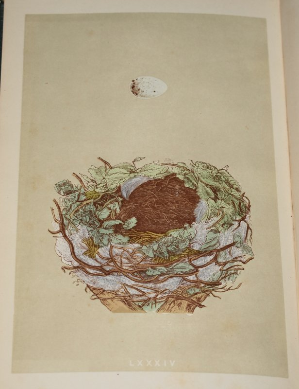 Image for A Natural History of the Nests and Eggs of British Birds.