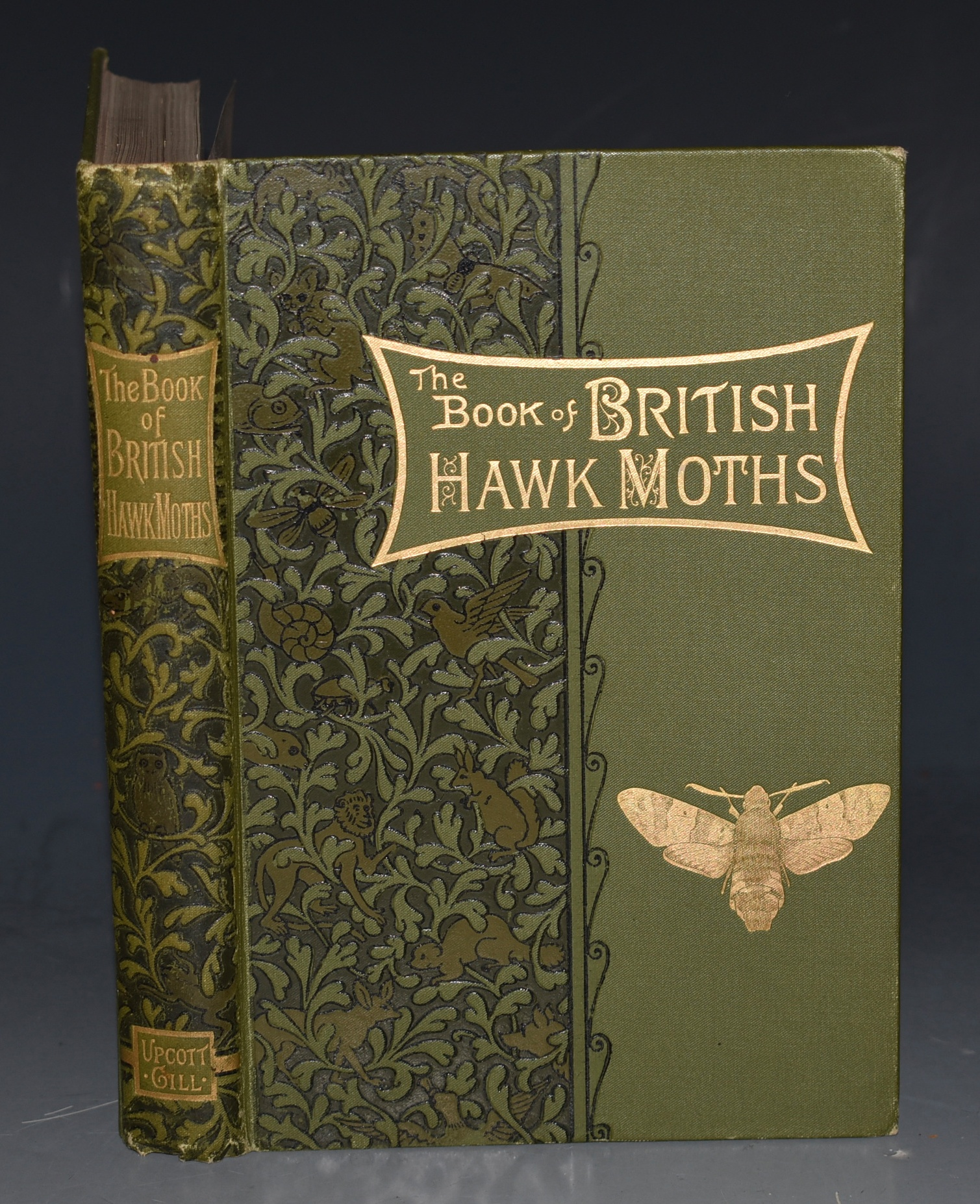 Image for The Book of British Hawk-Moths A Popular and Practical Handbook for Lepidopterists. Fully Illustrations From Nature by the Author.
