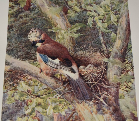 Image for The British Bird Book. An Account of all the Birds, Nests and Eggs found in the British Isles. Illustrated by Two Hundred Coloured Drawings and Numerous Photographs. In Four Volumes.