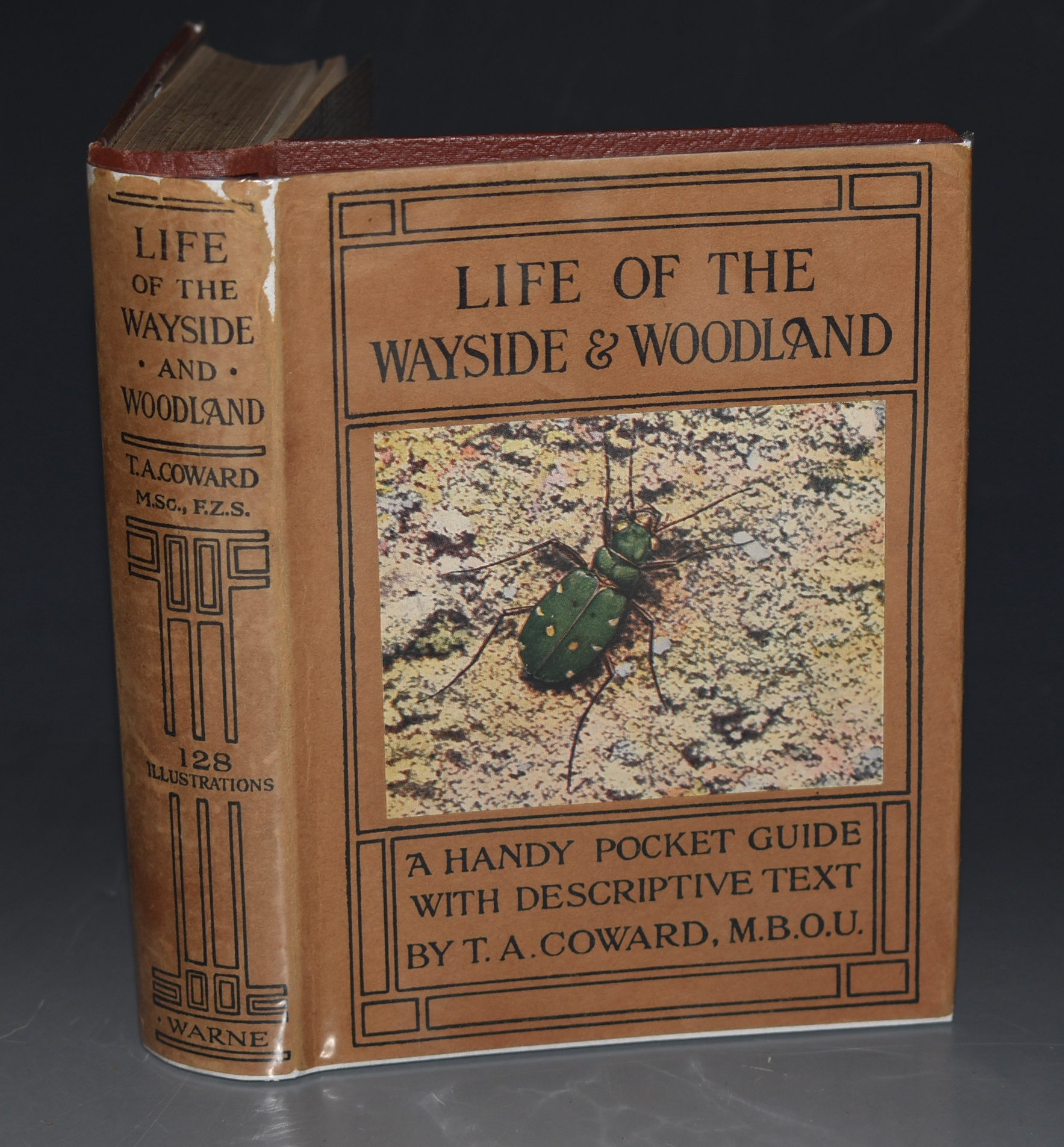 Image for Life of the Wayside & Woodland. When, Where, and What to Observe and Collect. With 128 Illustrations from Photographs 40 of which prepared in Colour by W. J. Stokoe, and 11 by Thomas Baddeley.