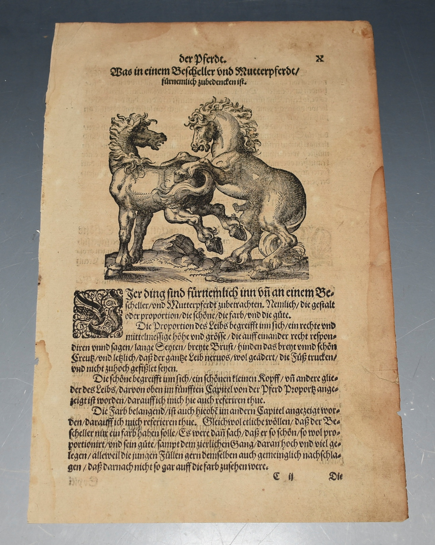 Image for EARLY Woodcut Illustration of Horse & a Stallion Ritterliche Reutter Kunst