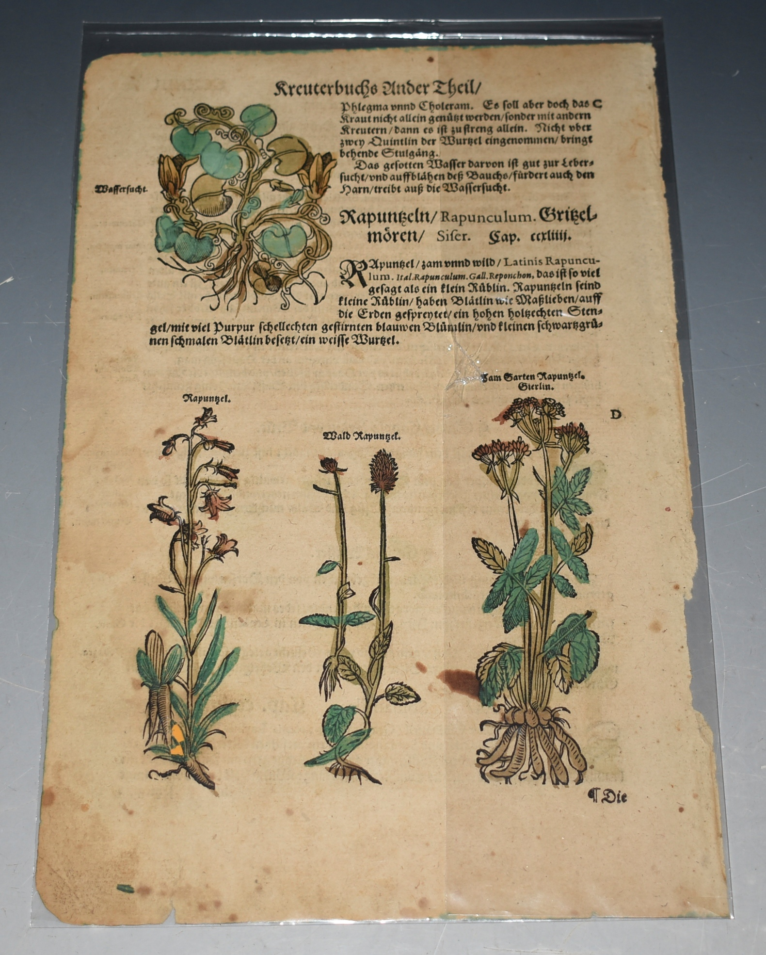 "Image for Early Printing Leaf from a Herbal by Adam Lonicer, ""Kreuterbuch"" Four nice Woodcuts with old handcolouring."