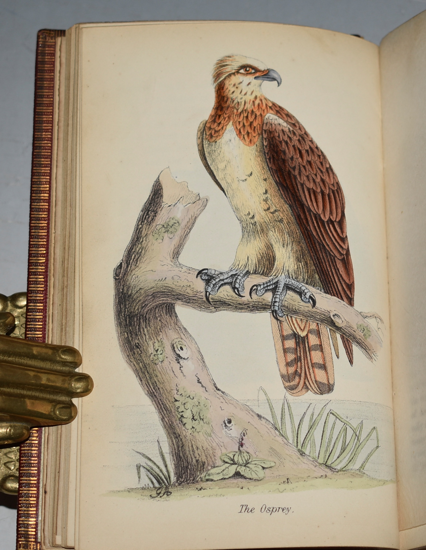 Image for Beautiful Birds, Their Natural History, Habits &c. Edited from the Manuscript of the Late John Cotton, Esq. First, Second, and Third Series. In Three Volumes.