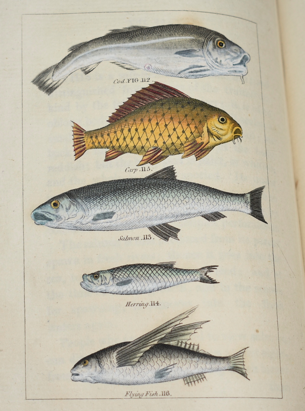 Image for Buffon's Natural History. Containing A Theory of the Earth, A General History of Man, of the Brute Creation, and of Vegetables, Minerals, &c. &c. From the French. With Notes by the Translator. In Ten Volumes, PLUS, Six Volumes, Natural History of Fish, Insects and Reptiles. Complete in Sixteen Volumes.