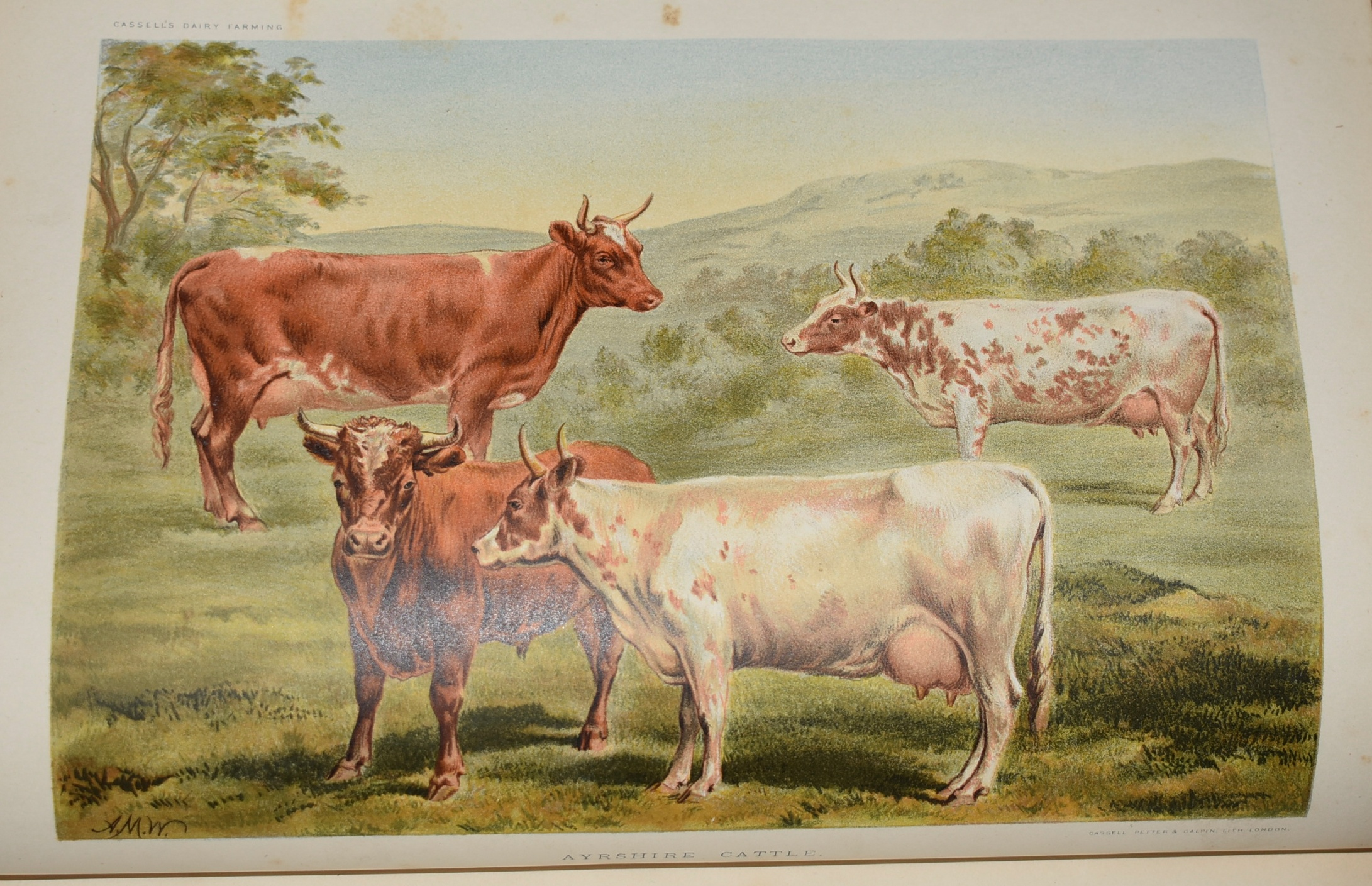 Image for Dairy Farming: Being the Theory, Practice and Methods of Dairying. With Twenty-five Coloured Plates.