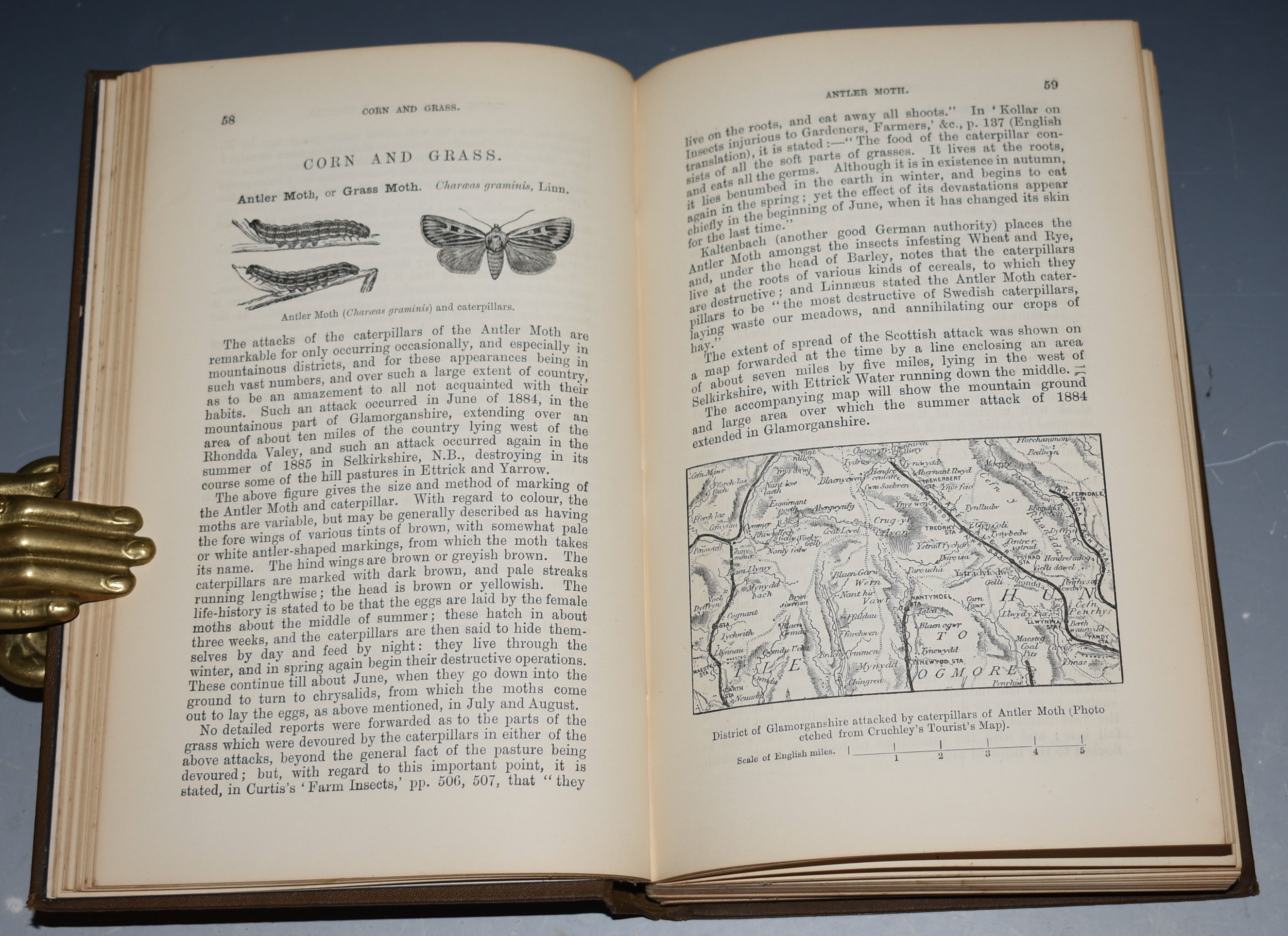 Image for A Manual of Injurious Insects, With methods of Prevention and Remedy for their attacks to Food Crops, Forest trees, and Fruit. To which is appended a Short Introduction to Entomology. Second edition.